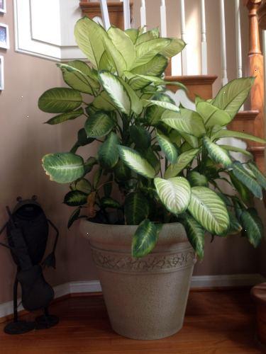 giftige stueplanter for katte