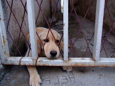 hjemløse dyr